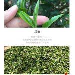 TRA08 – Phuc Hai Huong 2014 (4)